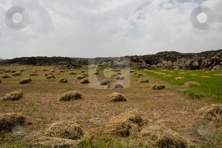 Hay on the meadow stock photo, A lot of hay stack on the meadow in Turkey by Tomasz Parys