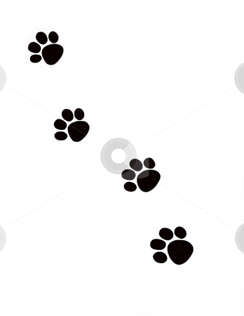 Pawprints stock photo, Black silhouettes of animal pawprints against white background. by Kathy Piper