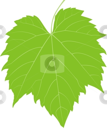 Grape Leaf Low Detail stock vector clipart, A low detailed grape plant leaf by Fowzan Ahmed
