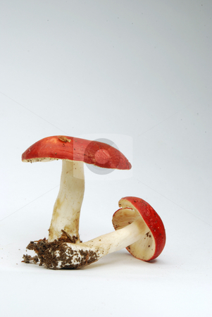 Toadstools stock photo,  by Sarka