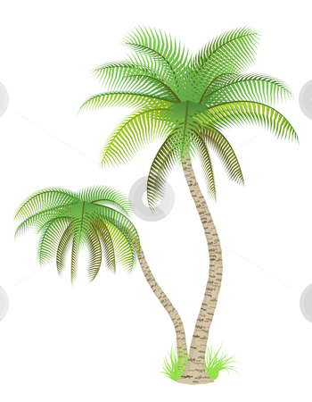 Palm trees stock vector clipart, Vector illustration of palm trees over white by Laurent Renault