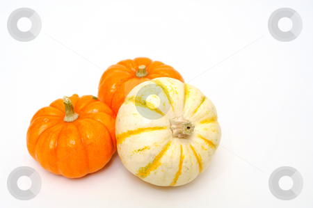 Decorative Pumpkins stock photo, Decorative orange and white pumpkins isolated on a white background by Lynn Bendickson