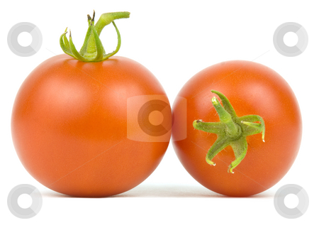 Two Tomatoes stock photo, Two ripe tomatoes on a white background by John Teeter