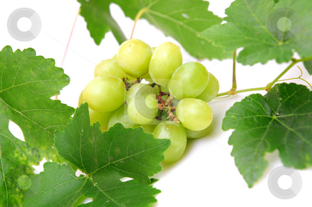 Green Grapes stock photo, Bunch of seedless grapes and grapevine on a white background by Lynn Bendickson