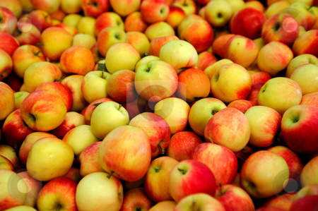Yellow And Red Apple stock photo, Fresh harvested apples in various shades of red and yellow by Lynn Bendickson