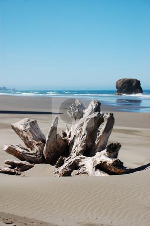 Driftwood on beach stock photo, Driftwood on Oregon beach by perlphoto