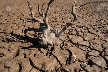 Drought Cracks stock photo, Dry land due to lack of rain by Jack Schiffer