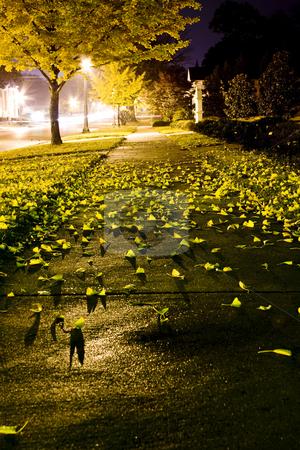 Night Fall stock photo, Leaves on a sidewalk at night by Ley Elliott