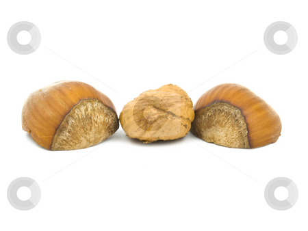 Hazelnuts on white stock photo, Hazel nuts on a white background with shell by John Teeter