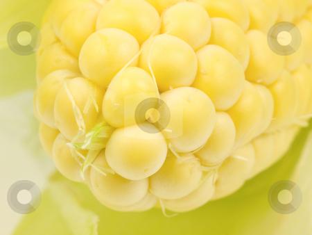 Corn Cob Close up stock photo, Corn Cob tip close up on yellow kernals by John Teeter