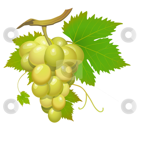 White grape stock vector clipart, White grape cluster with green leafs isolated by Laurent Renault