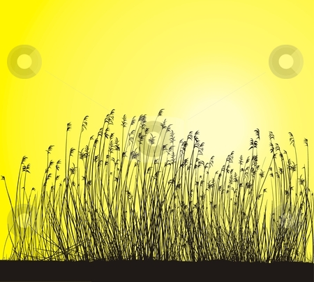 Reed stock vector clipart, Reeds On Yellow Background Isolated Vector Illlustration by Čerešňák