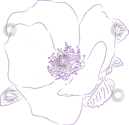 Flower of the sweetbrier stock vector clipart, Planimetric drawing of a flower of a dogrose. by Liubov Nazarova