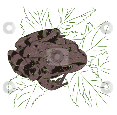 Meadow Frog stock vector clipart, The brown meadow frog sits on green leaves by Liubov Nazarova