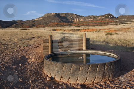 Cattle watering hole in Colorado mountains stock photo, Cattle watering hole in Red Mountain Open Space, semi desert landscape in northern Colorado near Wyoming border, late summer, reservoir fabricated from old giant tire by Marek Uliasz