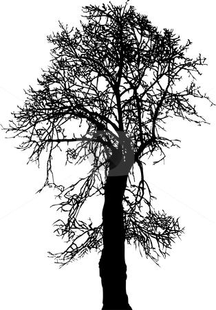 Linden Tree stock vector clipart, Silhouette old linden tree winter, vector illustration by Čerešňák