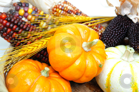 Pumpkins And Indian Corn stock photo, Decorative orange and white pumpkins with Indian corn and golden wheat by Lynn Bendickson