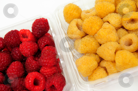 Red And Golden Raspberry stock photo, Red and golden raspberries in a plastic store container on a white nackground by Lynn Bendickson