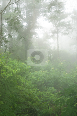 Natural woodland with fog stock photo, Natural woodland with fog. tropical forest in asia. by Lawren