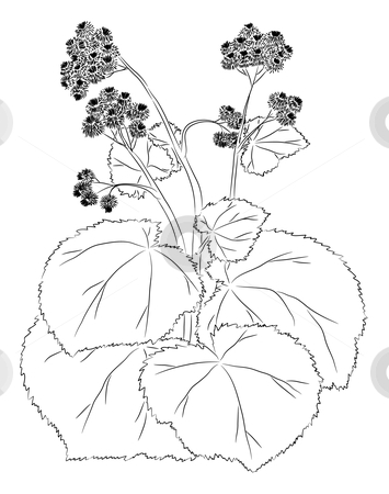 Graceful burdock stock vector clipart, The burdock sketch. Graphic work. There is a variant in a vector. by Liubov Nazarova