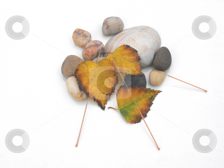 Acupuncture needles concept of autumn, water and earth stock photo, Acupuncture needles displayed with stones, shell and utumn leaves by Chris Clews