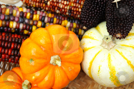 Indian Corn And Small Pumpkins stock photo, Decorative orange and white pumpkins with different colored Indian corn. by Lynn Bendickson