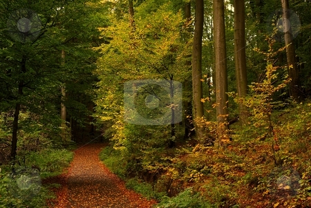 Tree trunks in colorful forest stock photo, Tree trunks in colorful forest with a road covered with fallen leaves by Juraj Kovacik