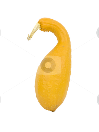 Squash on white stock photo, Squash on a white background by John Teeter