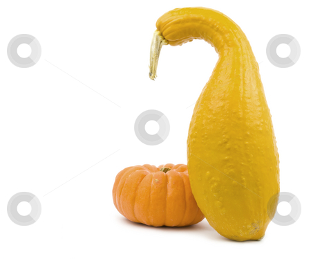 Squash and Pumpkin stock photo, Squash and pumpkin on a white background by John Teeter
