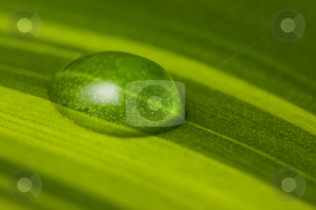 Water drop green leaf stock photo, One water drop on fresh green leaf by Peter Kirillov