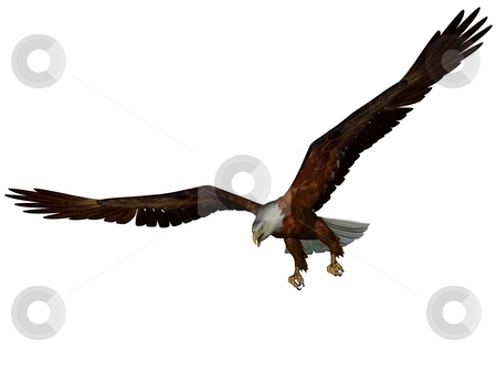 Eagle stock photo, 3D rendered eagle on white background isolated by Patrik Ruzic