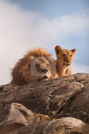 Lion and cub stock photo, Lion and cub on a rocky top facing camera by Thomas ??derud