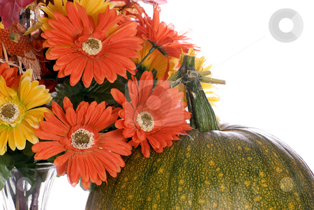 Fall Colors stock photo, Closeup view of the top of a pumpkin changing colors and some artificial flowers next to it, isolated against a white background by Richard Nelson