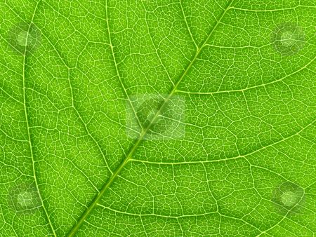 Vibrant green leaf macro close up natural background. stock photo, Vibrant green leaf macro close up natural background. by Stephen Rees
