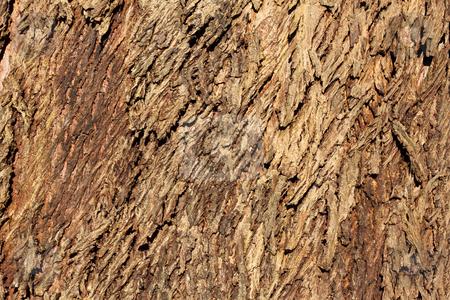Rough tree bark texture background. stock photo, Rough tree bark texture background. by Stephen Rees