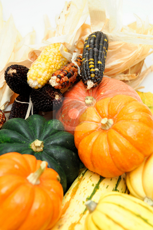 Indian Corn And Squash stock photo, Assorted squash including green and white Acorn, Gold Nugget, Delicata, small pumpkins and colorful Indian corn on a light colored background. by Lynn Bendickson