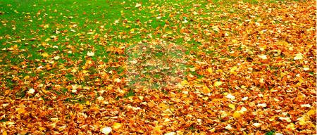 Autumn stock photo, Autumn by Julian Weber