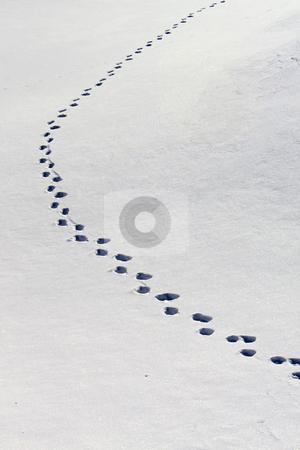 Winter stock photo, Winter by Julian Weber