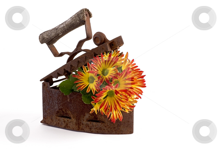 Flower stock photo, Flowers planted in old iron by Barna Tanko