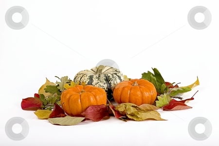 Pumpkins stock photo, Pumpkins in seasonal setup by Barna Tanko