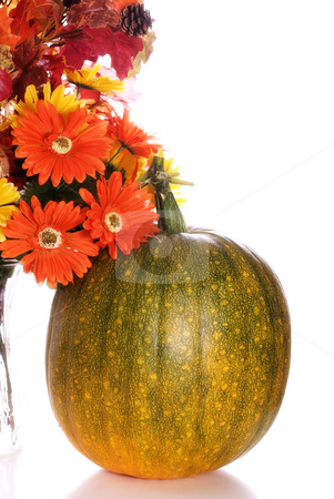 Ripening Pumpkin stock photo, A ripening pumpkin sitting next to some artificial daisies, isolated against a white background by Richard Nelson