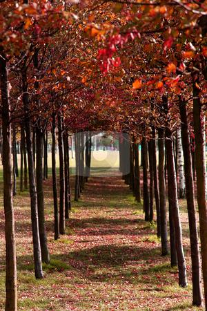 Autumn stock photo, Autumn leafs by Chris Davidson