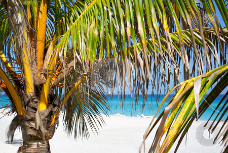 Palm trees in a sandy beach stock photo, Palm trees in a sandy beach with clear blue water by Karel Miragaya