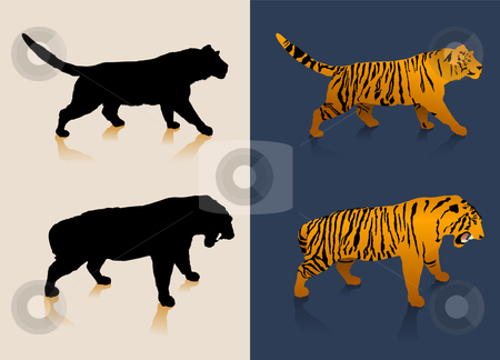 Black and white tiger silhouettes and color images stock vector clipart, Black and white tiger silhouettes and color images. Original vector illustration by L Belomlinsky