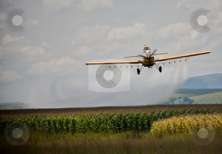 CropSprayer stock photo, Crop sprayer in action spraying chemicals on a crop of mealies by Ian Genis