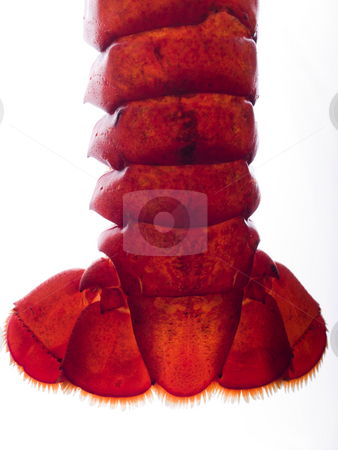 Lobster tail stock photo, Foodstuff by Jim DeLillo