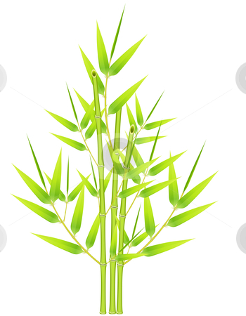 Bunch of bamboos  stock vector clipart, Bunch of bamboos over a white background by Laurent Renault