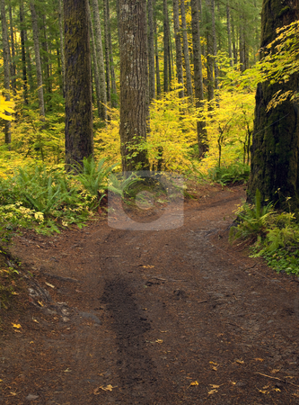 Tracks of Autumn stock photo, A 4-wheel drive left tracks on this dirt road through autumn adorned trees. by Mike Dawson