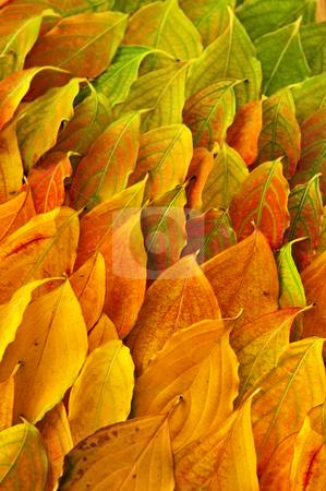 Autumn leaves background stock photo, Colorful fall background of arranged autumn leaves by Elena Elisseeva