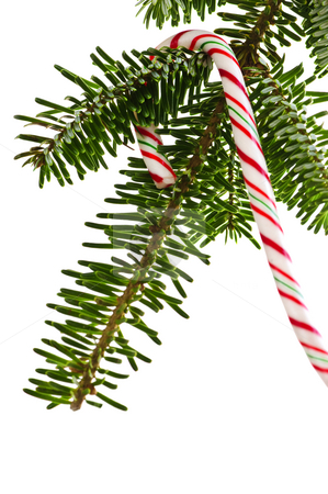 Candy cane on tree stock photo, Closeup of striped candy cane hung on christmas tree isolated on white by Elena Elisseeva